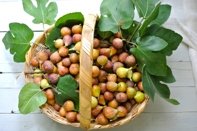 Basket of fresh picked figs