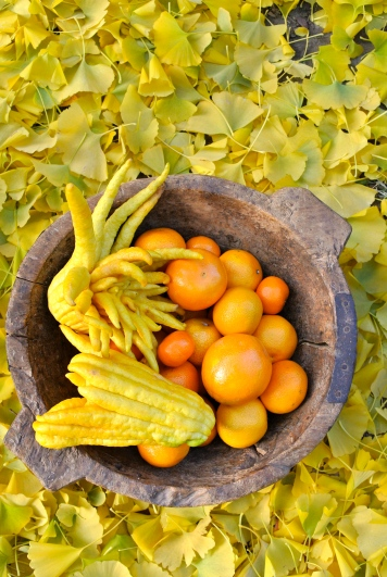 Buddha's Hand Still Life on Gingko Leaves, 5th Avenue North